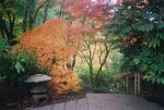 Butcharts Japanese Garden maple fall