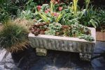 A classic stone container features a collection of drought tolerant hardy succulents that once more have been selected to provide year round interest with their different foliage colours and textures. Hardy sedums, with their usefulness for planting on the trend setting green roofs, have stayed popular for 2005