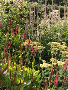 high summer perennial planting in style of Piet Oudolf