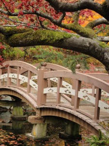 Fall setting for Japanese bridge at heritage Hatley Japanese garden