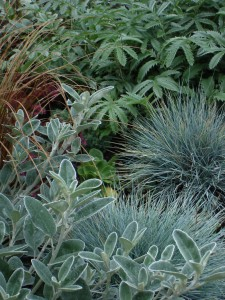 drought tolerant plant combination